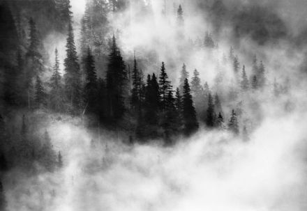 Easy to Install wallpaper Foggy forest